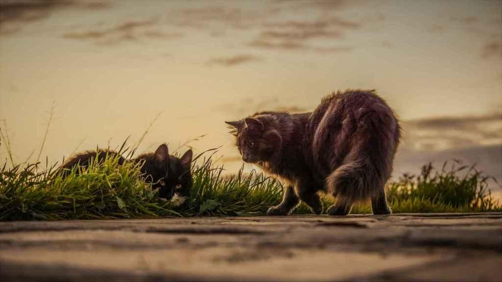 Repelentes caseros para alejar a los gatos
