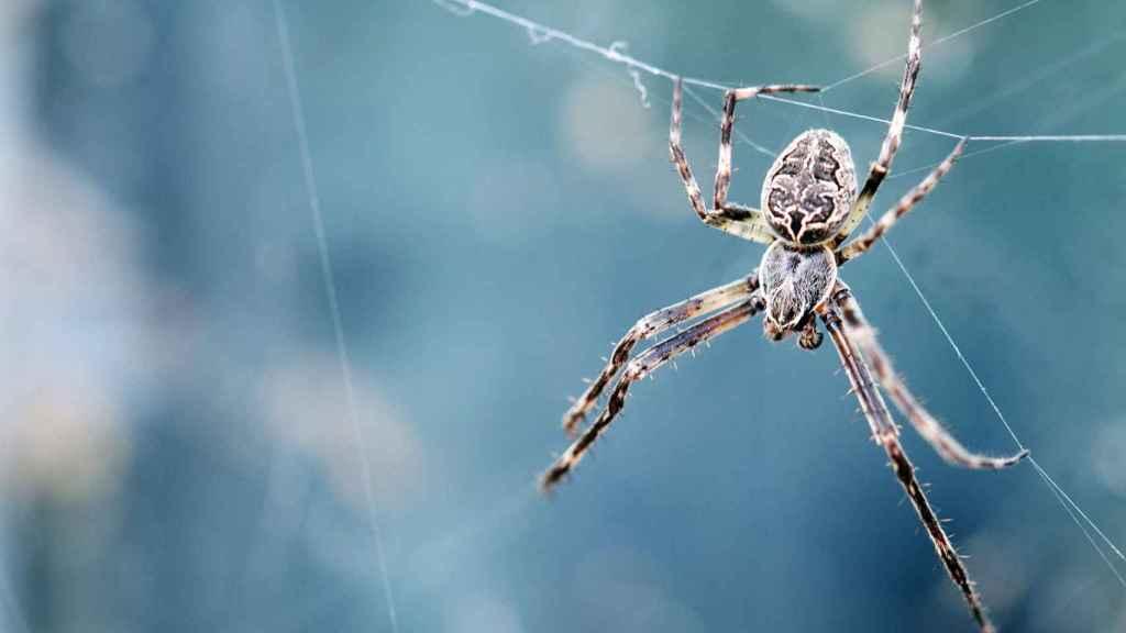Araña.