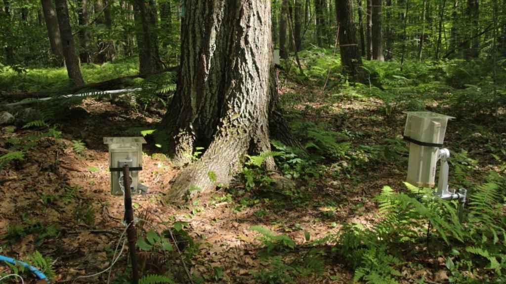 Cámaras y sensores alrededor del árbol.