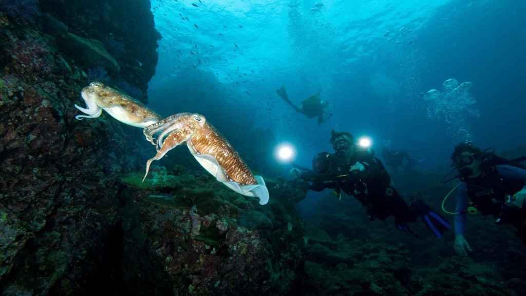 Imagen del programa 'Viaje a las profundidades' del canal Viajar.