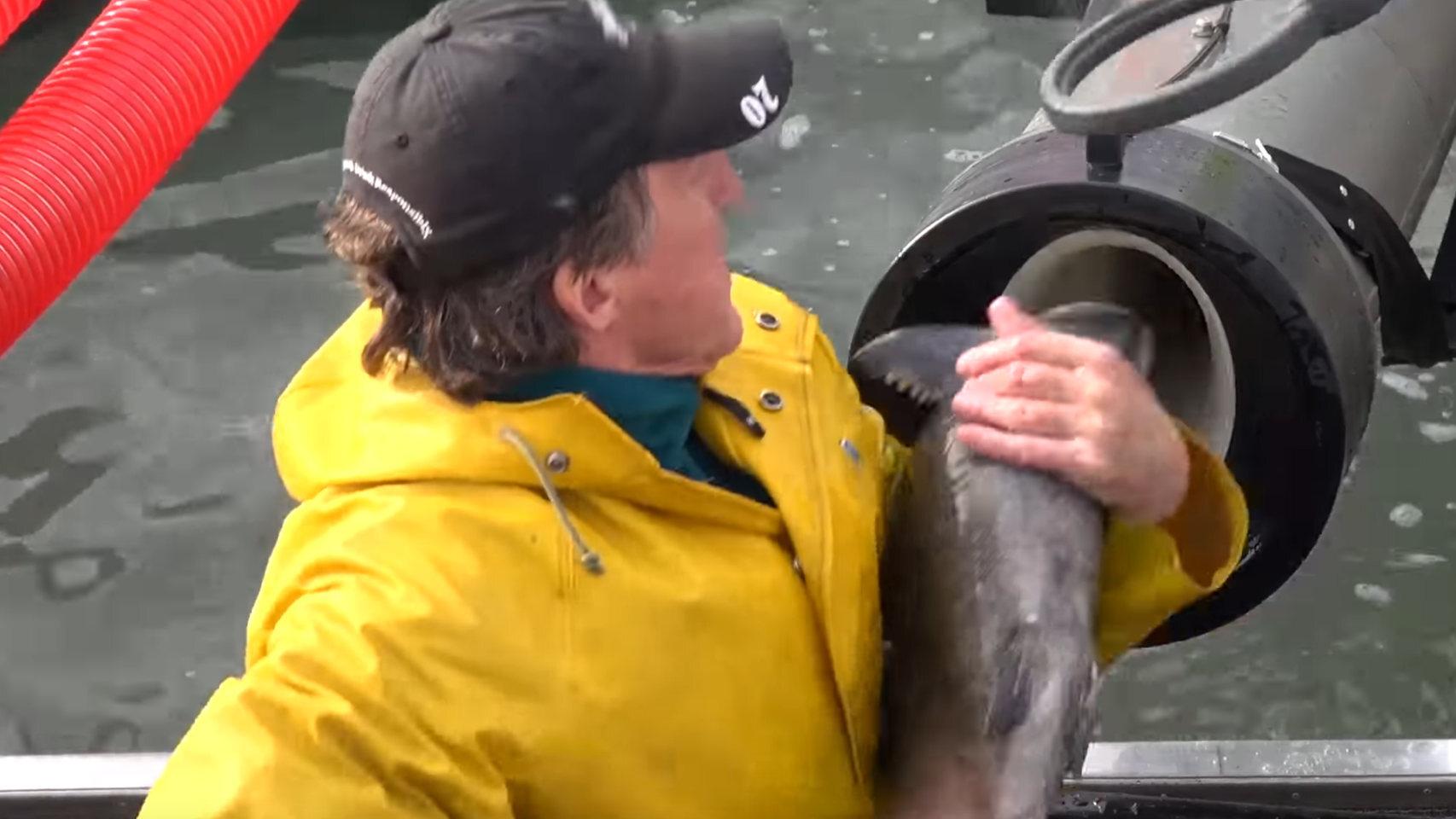 Cañón de salmón