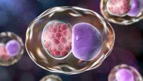 Imagen de la bacteria 'Chlamydia trachomatis'