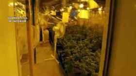 La Guardia Civil interviene 2.800 plantas de marihuana.