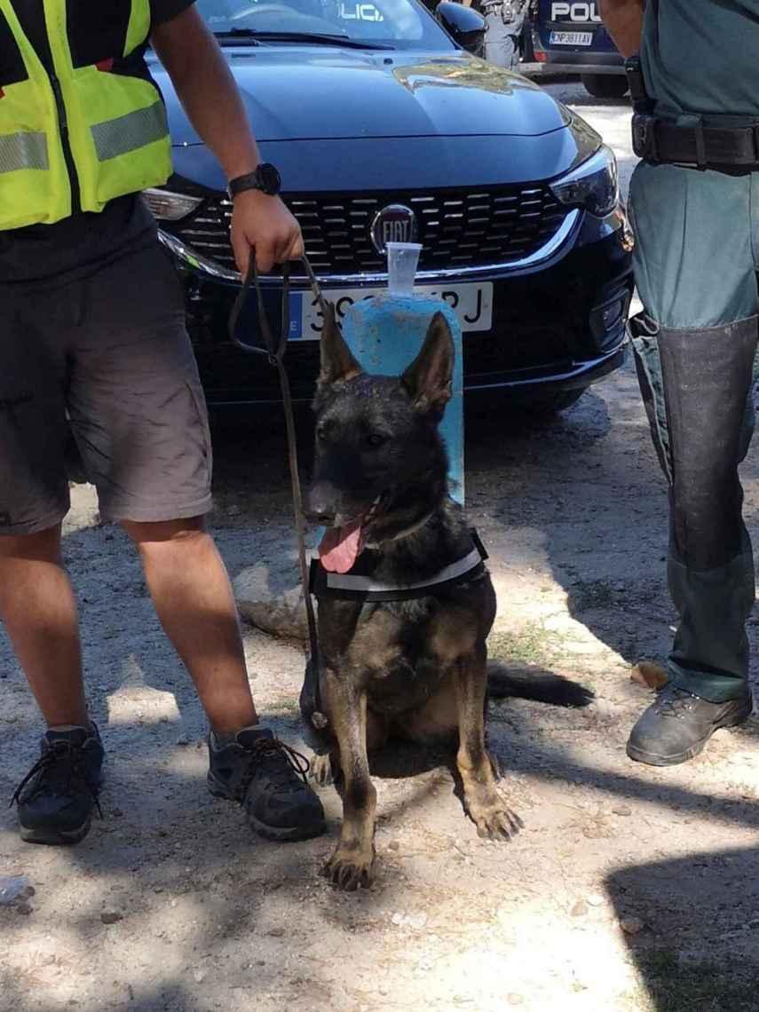 El animal paseaba junto a su dueño, un guardia civil fuera de servicio que reside por la zona, cuando halló el cadáver.