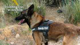 zamora guardia civil cinolog 2 perros