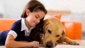 Perros abandonados, cuidados en una perrera