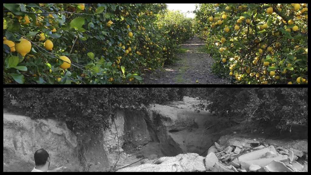 El antes y el después de la finca de pomelos de 'Los Coloraos' tras el paso de la DANA.