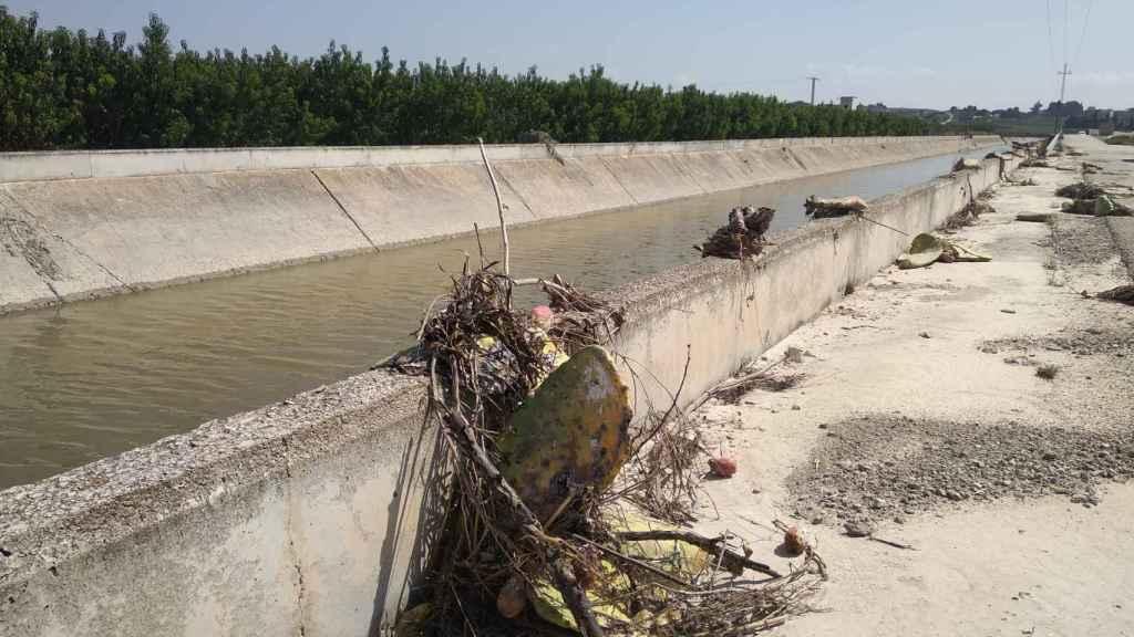Paleras que fueron arrancadas a lo largo de una vía de servicio que discurre paralela al canal del Trasvase Tajo -Segura desbordado por las lluvias.