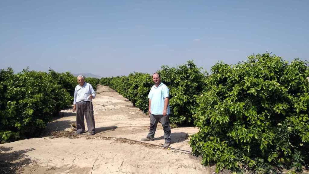 Pedro Antonio y su padre, 'El Colorao', examinando los campos de pomelo tras el desastre.