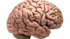 Golpe español al glioblastoma, el tumor cerebral más agresivo: hallado su talón de Aquiles