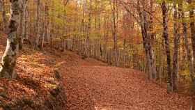 Hayedo Tejera Negra, dile hola al otoño