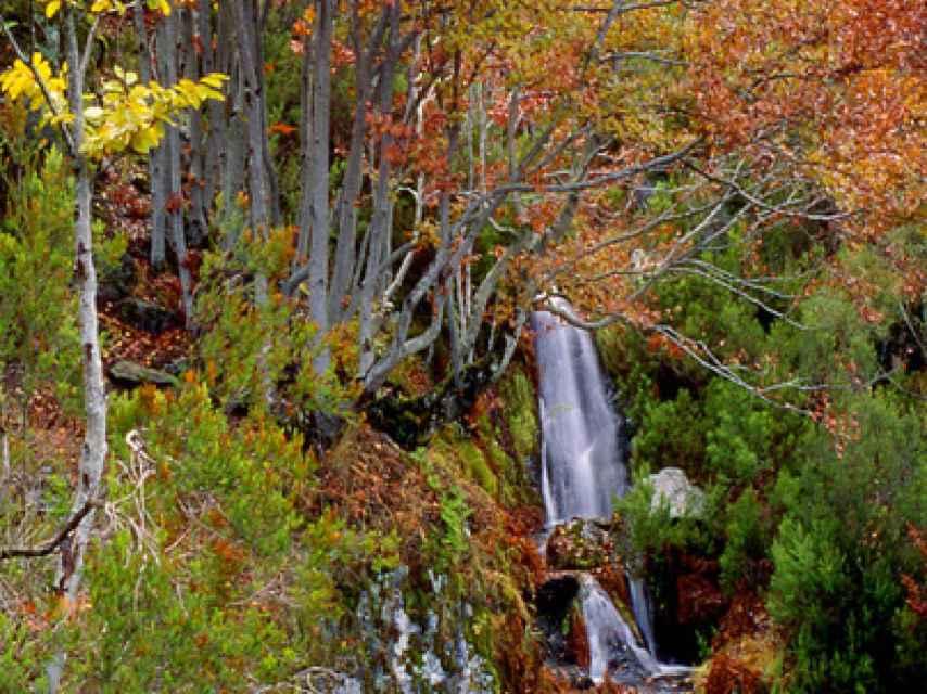 Pequeñas corrientes de agua y diferentes especies de árboles nos esperan en el hayedo.