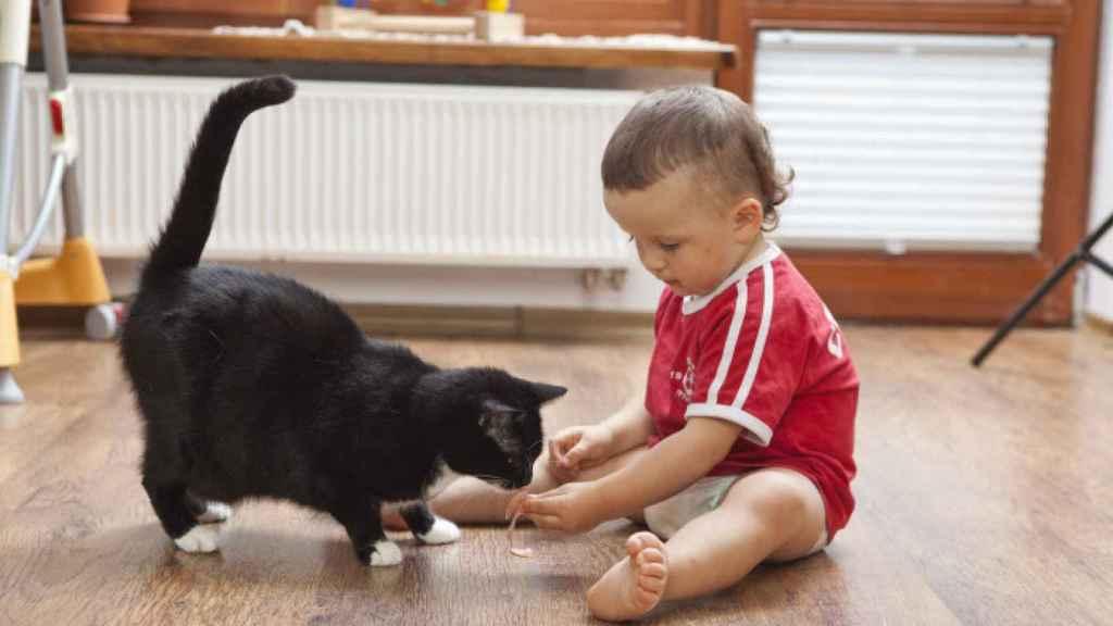 Los gatos son carnívoros más estrictos aún que los perros.