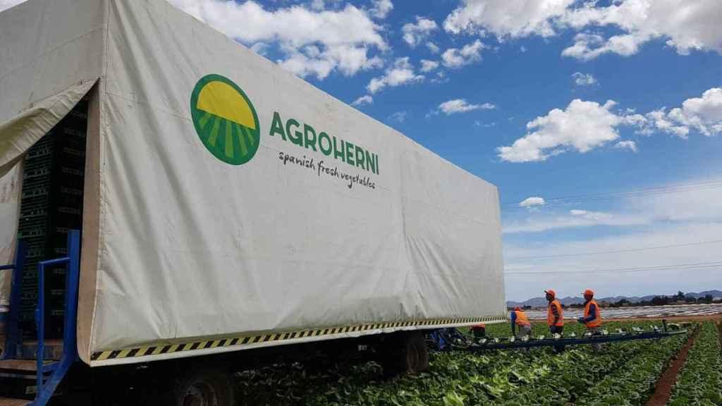 Unos jornaleros trabajando en una finca de Agroherni antes de que la empresa cesara la actividad tras entrar en preconcurso de acreedores.