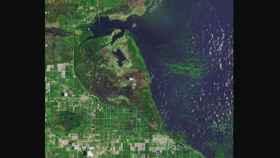 Imagen de la floración de algas tóxicas en el lago Okeechobee de Florida.