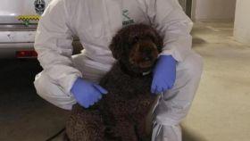 El perro era uno de los más utilizados por la Guardia Civil.