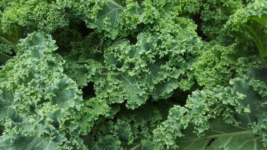 Las verduras de hoja verde