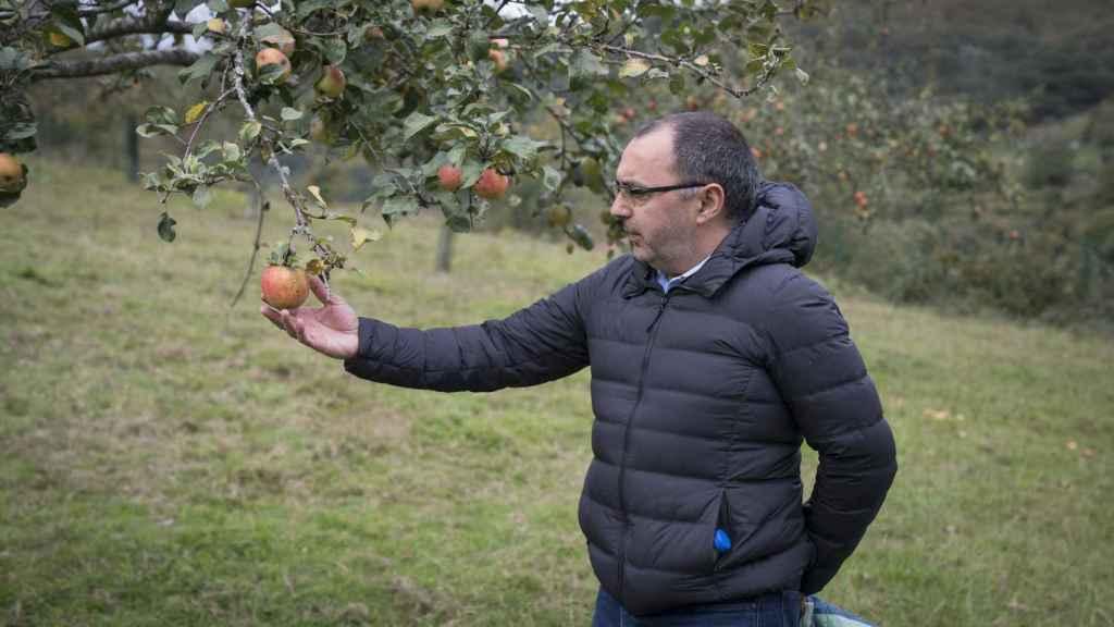 Manolo, en su finca, con las manzanas que le regalará a Letizia.