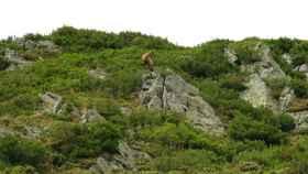 reserva regional de caza de los ancares