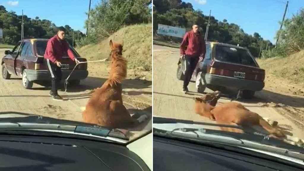 Un joven arrastra a un caballo con su coche.