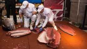 Ronqueo de atún rojo de almadraba en Madrid.