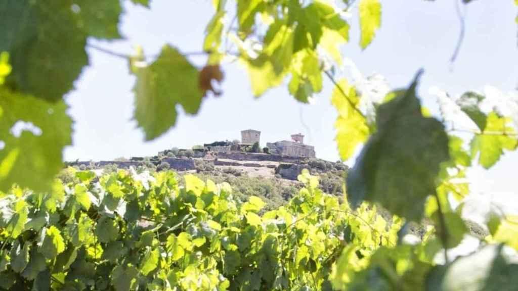 En Madrid también hay viñedos.