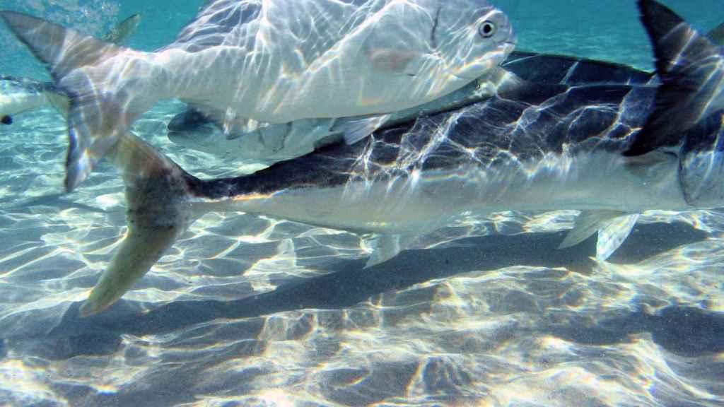 También se pueden ver enormes peces en sus aguas cristalinas.
