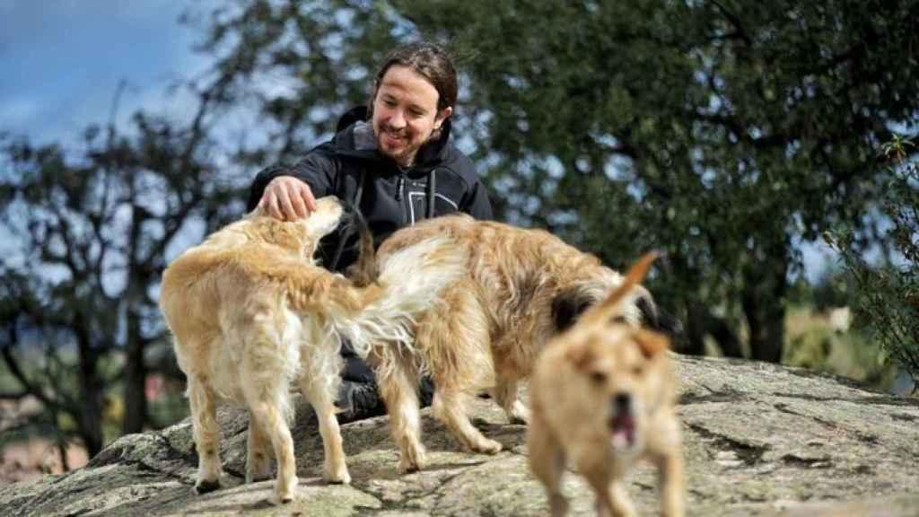 Iglesias con sus perros .