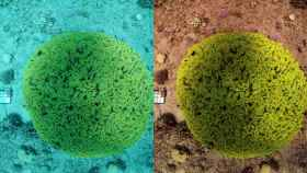 El increíble algoritmo que quita el agua de las fotos submarinas
