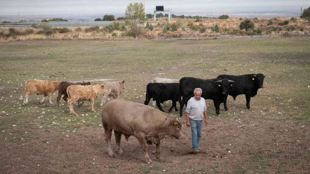 Las actividades agrícolas y ganaderas son las primeras que están sufriendo los efectos de la falta de precipitaciones.