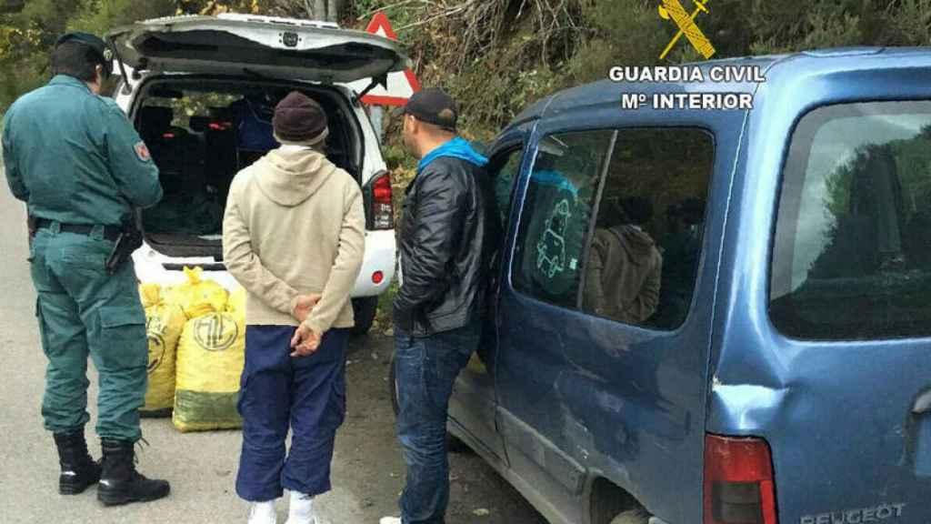 La Guardia Civil detiene a unos sospechosos de robos de castañas en El Bierzo (León)
