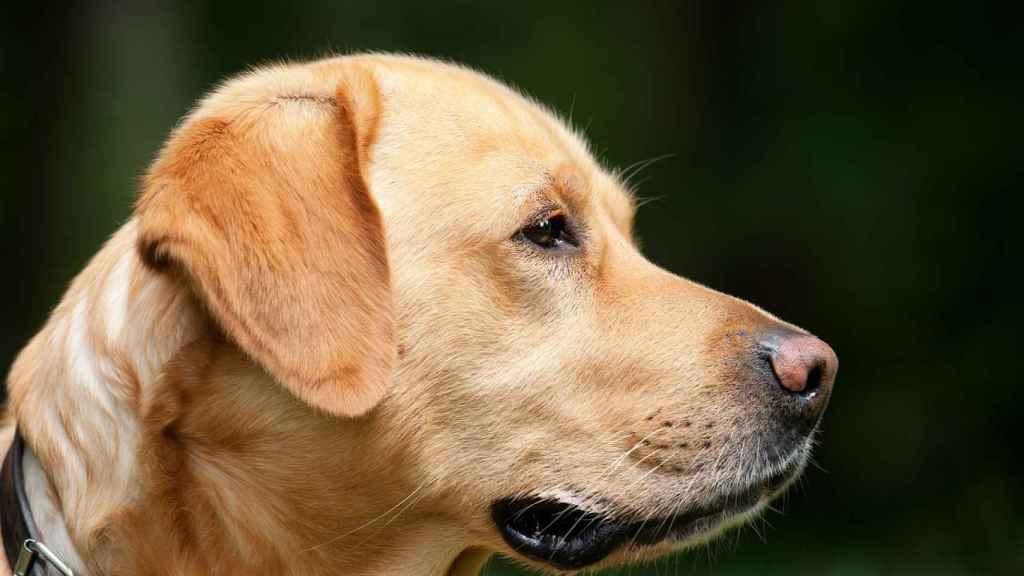 La temperatura normal de un perro es de unos 38º