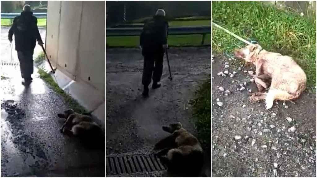 El cazador arrastra la perra tras darle una paliza y pegarle un tiro.