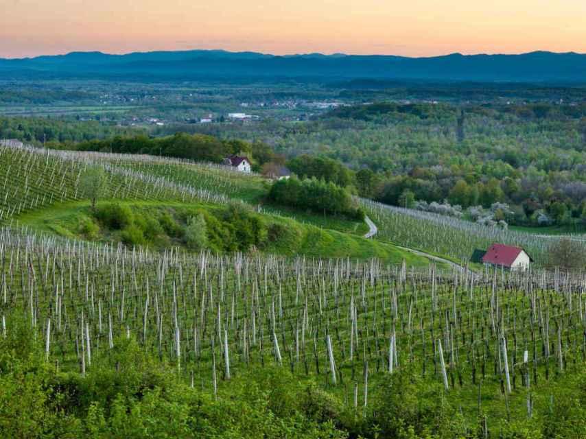 El clima y el terreno marcan la personalidad de los vinos eslovenos.