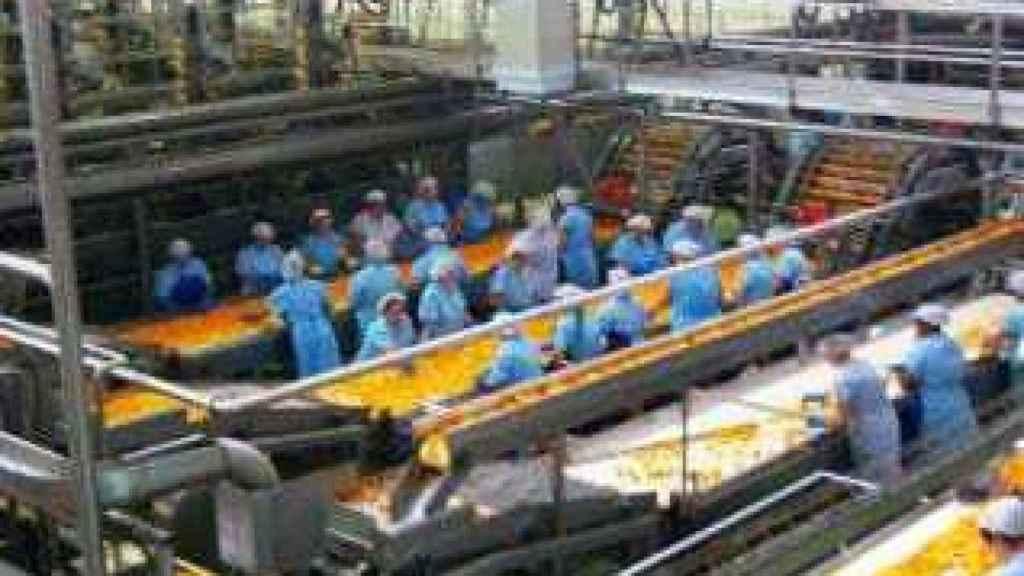 Empleadas trabajando en una de las líneas de manipulación de naranja de la firma.