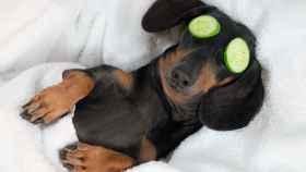 Los productos para cuidar a tu mascota mejor valorados por menos de 25 euros