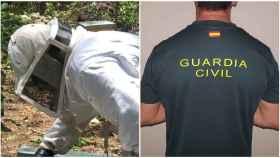 La batalla del guardia civil José para ser también apicultor: así ha vencido a Interior en los tribunales