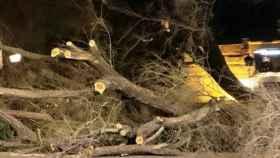 Árbol derribado por el viento este fin de semana en Toledo