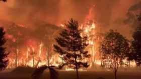 Las llamas han arrasado los bosques de Nuevo Gales