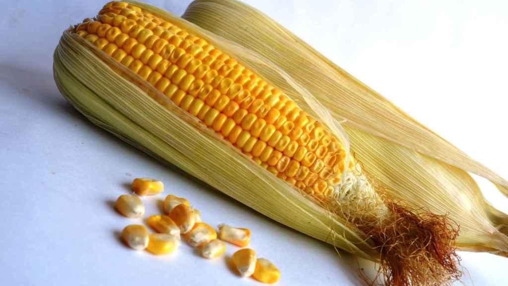 El maíz es un alimento con muchas propiedades nutricionales