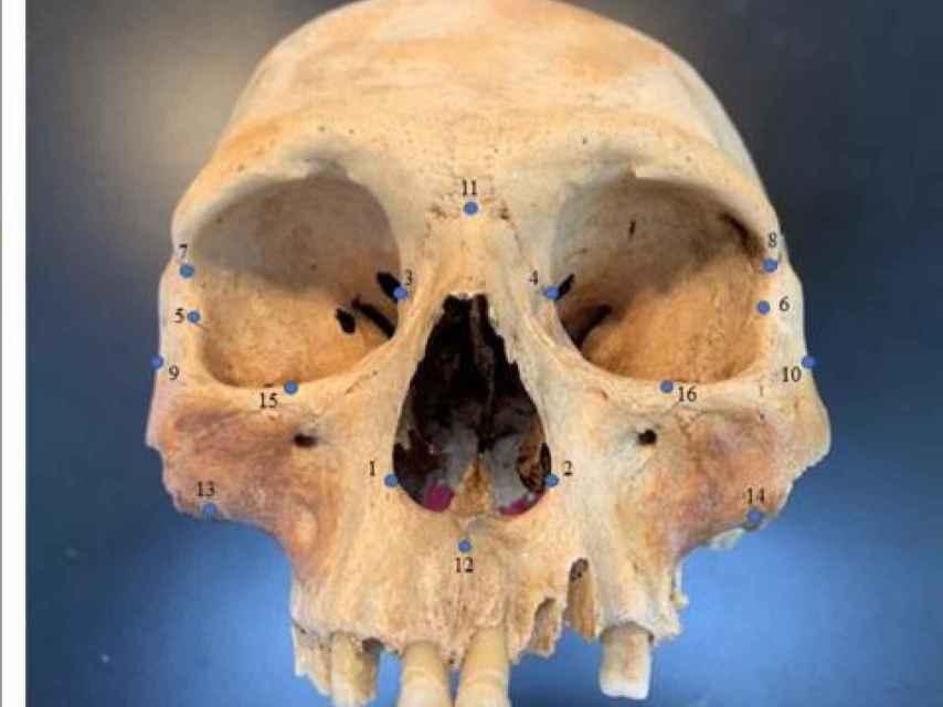 Uno de los cráneos analizados.