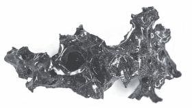Uno de los fragmentos del cerebro vitrificado.