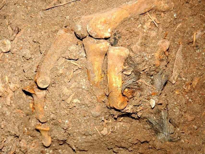 Una mano de los sujetos prehistóricos de Menorca agarrando restos de cabello.