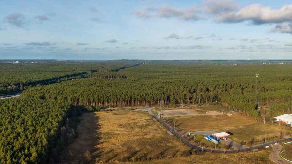 Zona del bosque de Grünhide donde se construirá la fábrica de Tesla