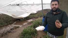 Vicente Fort, gerente de la Cooperativa Agro-Cítrica de Picassent (Valencia).