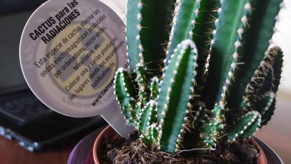 La etiqueta que promete que el cactus absorbe la radiación de la pantalla.