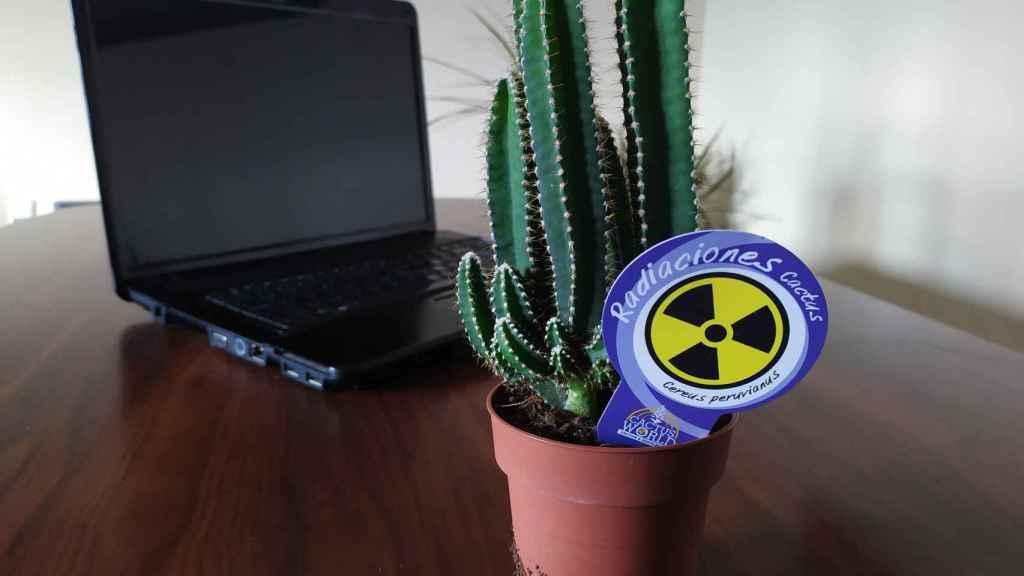 Un 'cactus contra la radiación'.