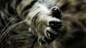 Una misión posible: cortar las uñas a un gato