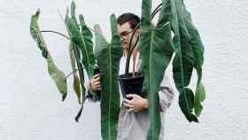 La Philodendron Spiritus-Sancti, 1.450 dólares de planta.