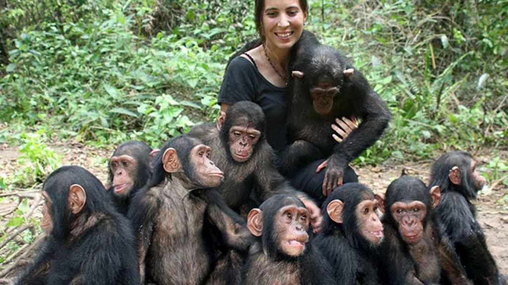 Rebeca Atencia con chimpancés bebés.